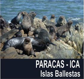 PARACAS-Ica