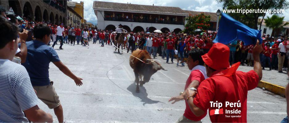 pascua toro