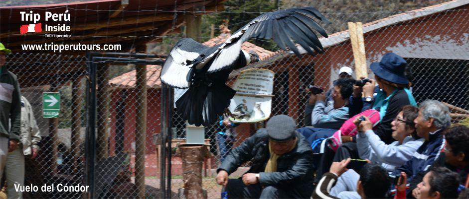 vuelo del condor en cusco