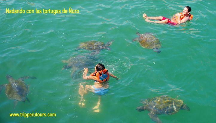 Ñuro nadando con las tortugas