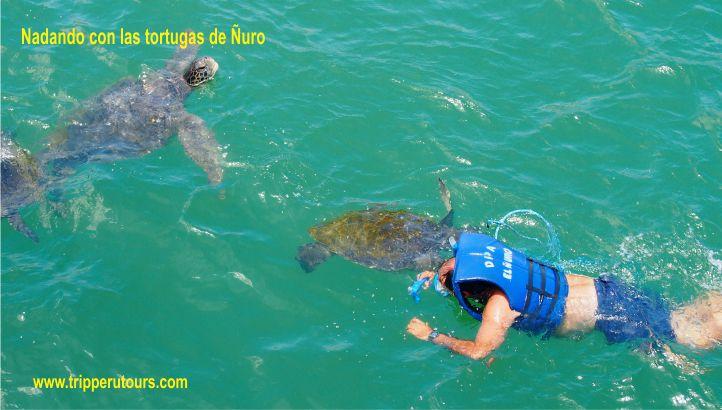 Ñuro tortugas peru