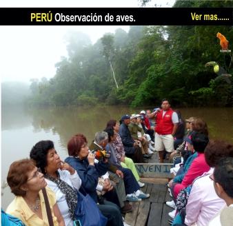 Tour Peru observacion de aves